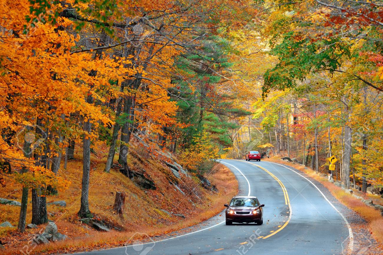 Autumn foliage in forest with road. - 39723839