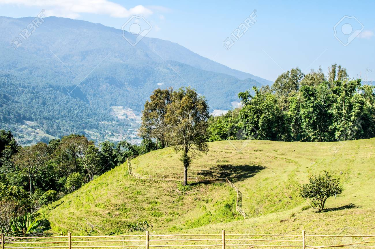 perennial trees lie in the middle of the meadow and the mountains