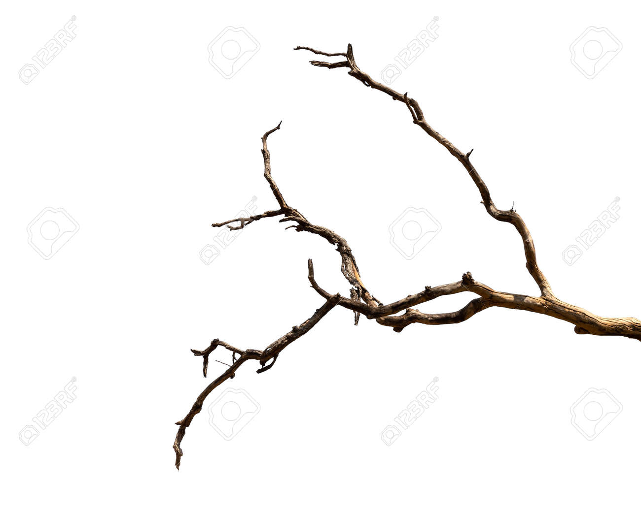 Dry branch of dead tree with cracked dark bark.beautiful dry branch of tree isolated on white background.Single old and dead tree.Dry wooden stick from the forest isolated on white background . - 140628286