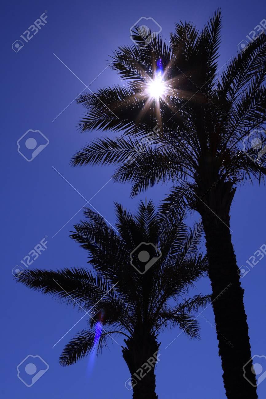 Palm's silhouette Stock Photo - 4871239