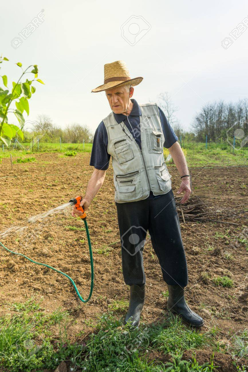 Elderly farmer with hat watering crops in early spring Stock Photo -  56040476 34e00905527e