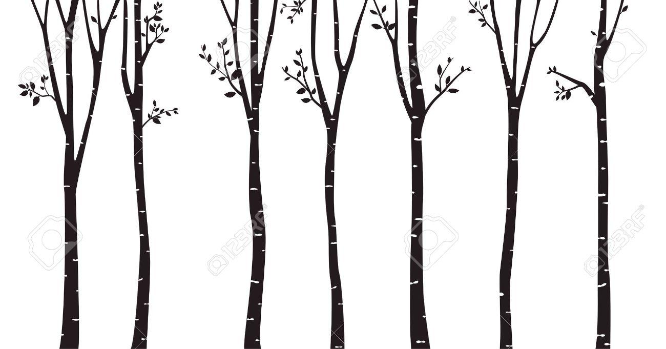 Birch Tree Silhouette Background - 64904330