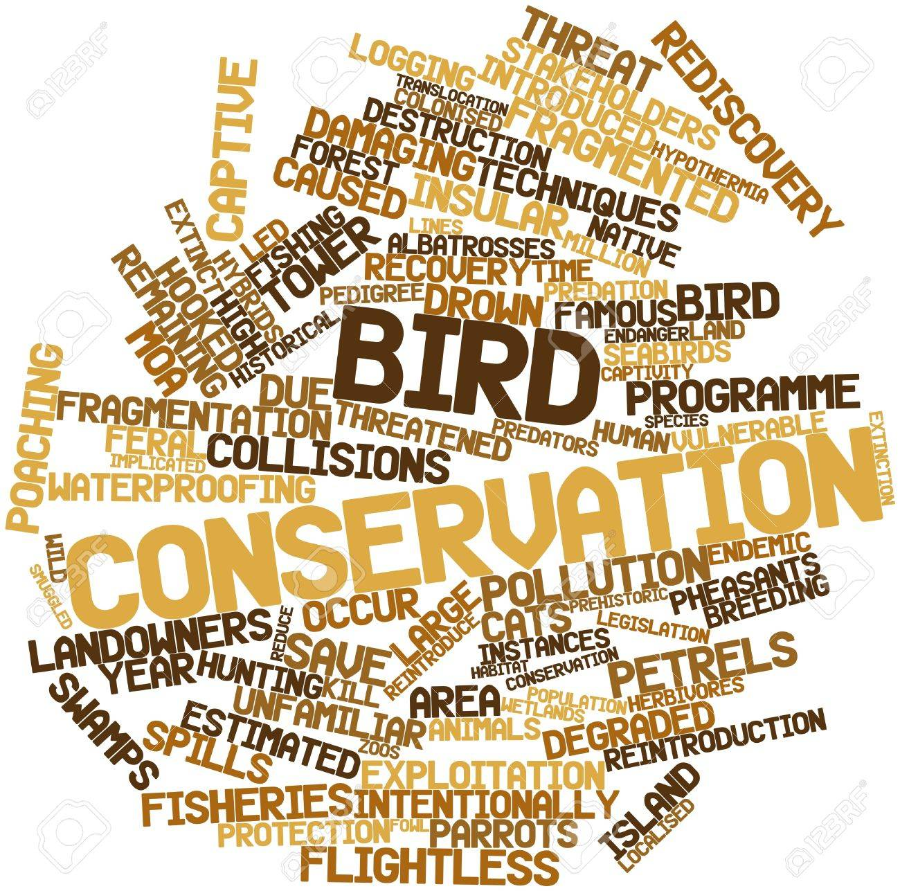 Abstract word cloud for Bird conservation with related tags and terms Stock Photo - 16499224