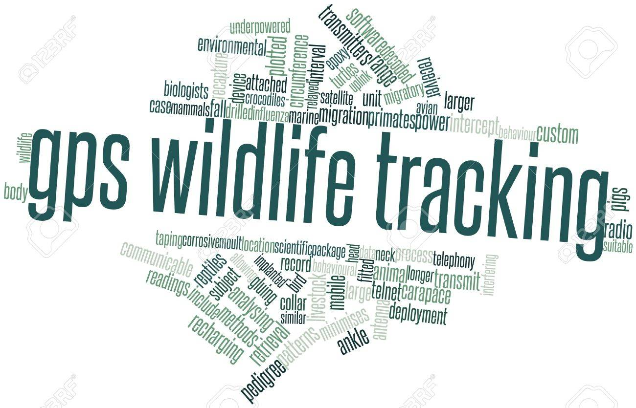 Abstract word cloud for GPS wildlife tracking with related tags and terms Stock Photo - 16498348