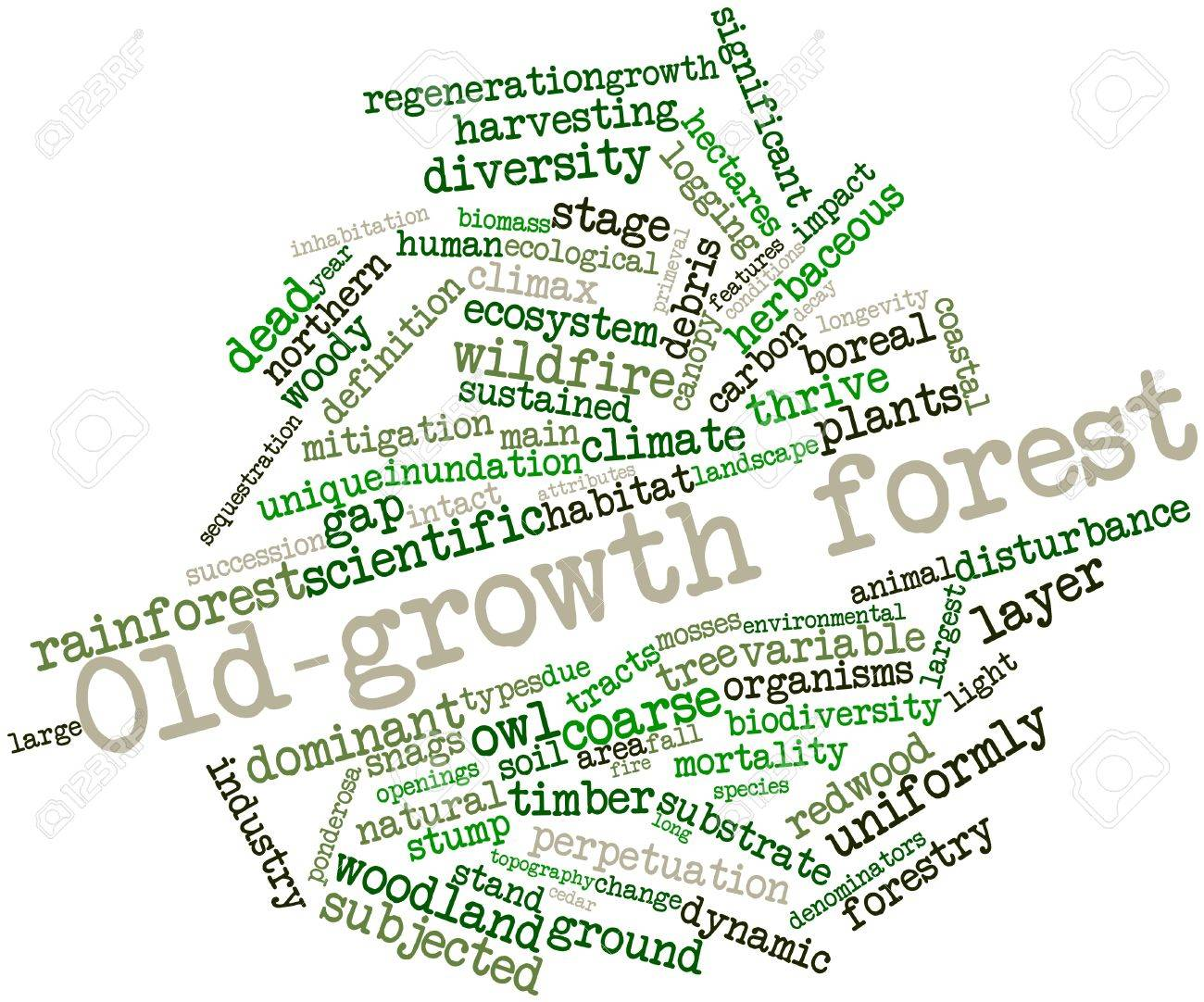 Abstract word cloud for Old-growth forest with related tags and terms Stock Photo - 16498846