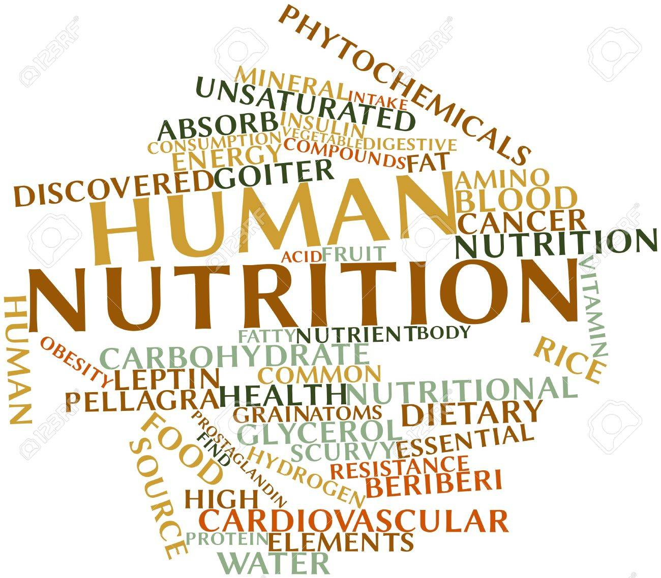 Image result for human nutrition