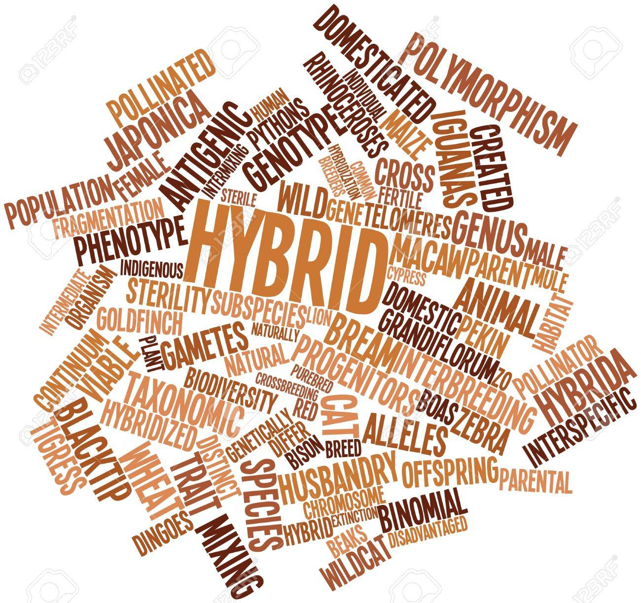 Abstract word cloud for Hybrid with related tags and terms Stock Photo - 16633393