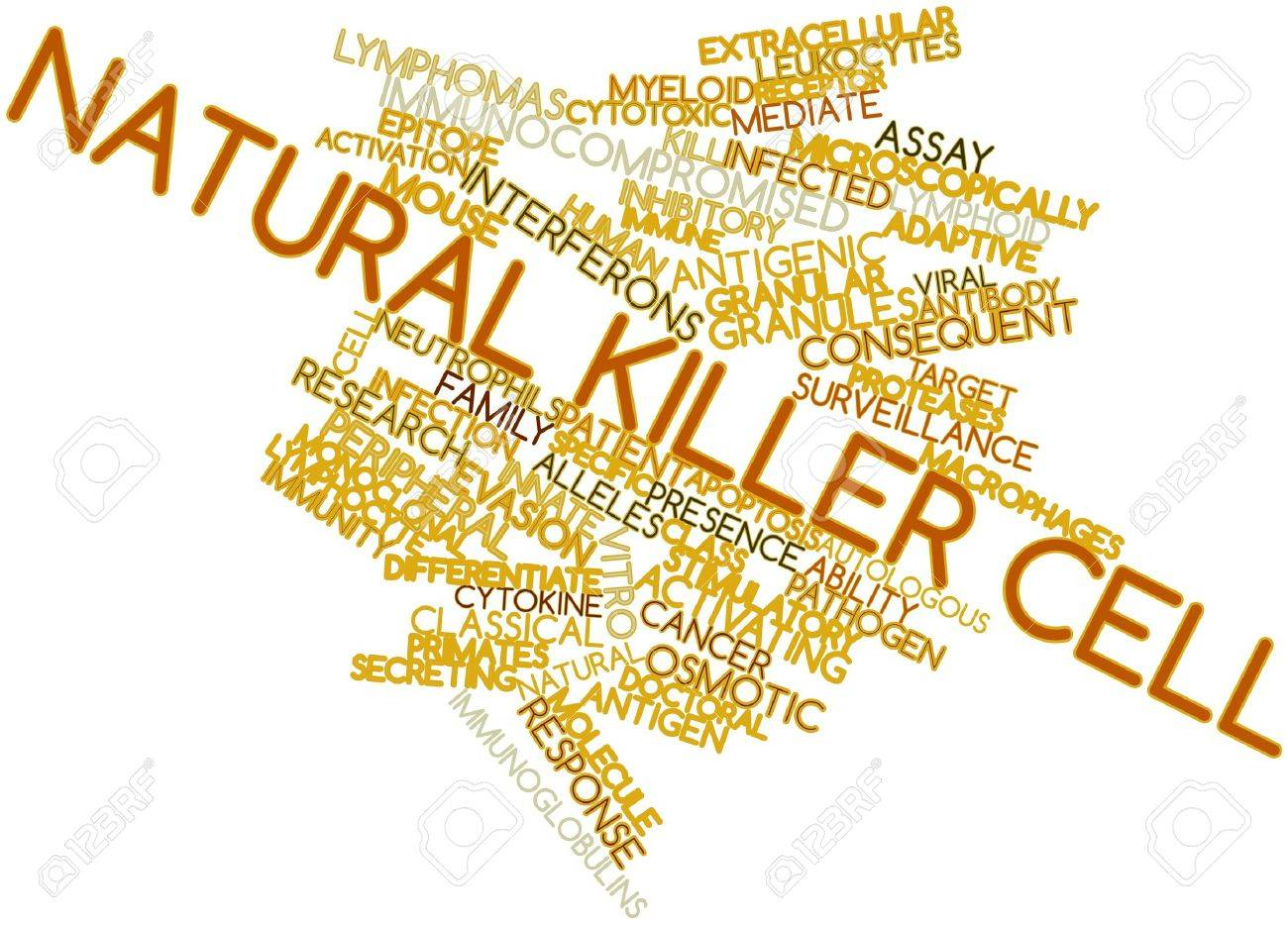 Abstract word cloud for Natural killer cell with related tags and terms Stock Photo - 16631565