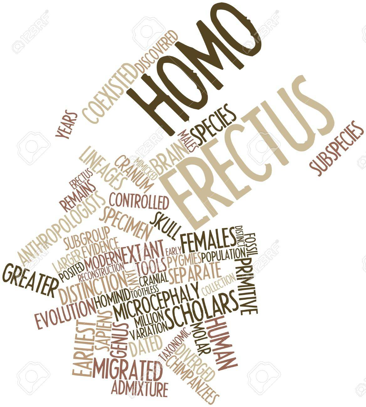 Abstract word cloud for Homo erectus with related tags and terms Stock Photo - 16678336
