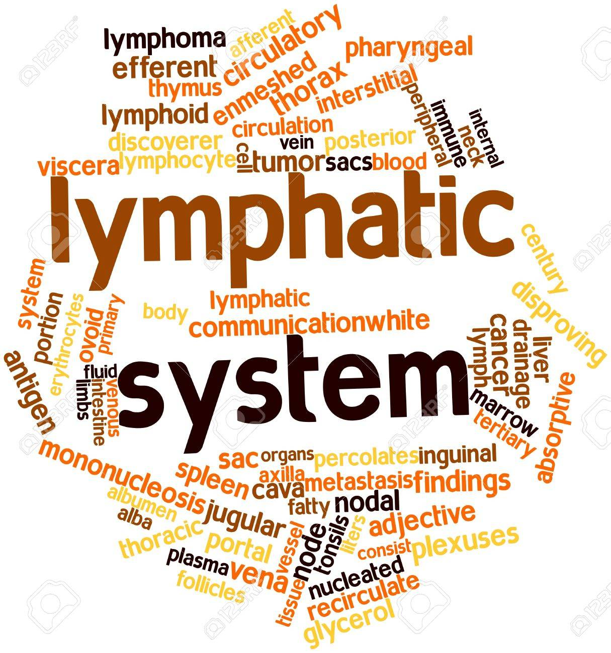 Abstract Word Cloud For Lymphatic System With Related Tags And ...
