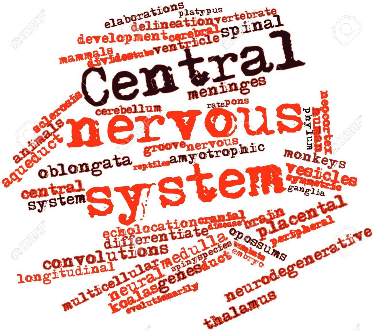 Abstract Word Cloud For Central Nervous System With Related Tags