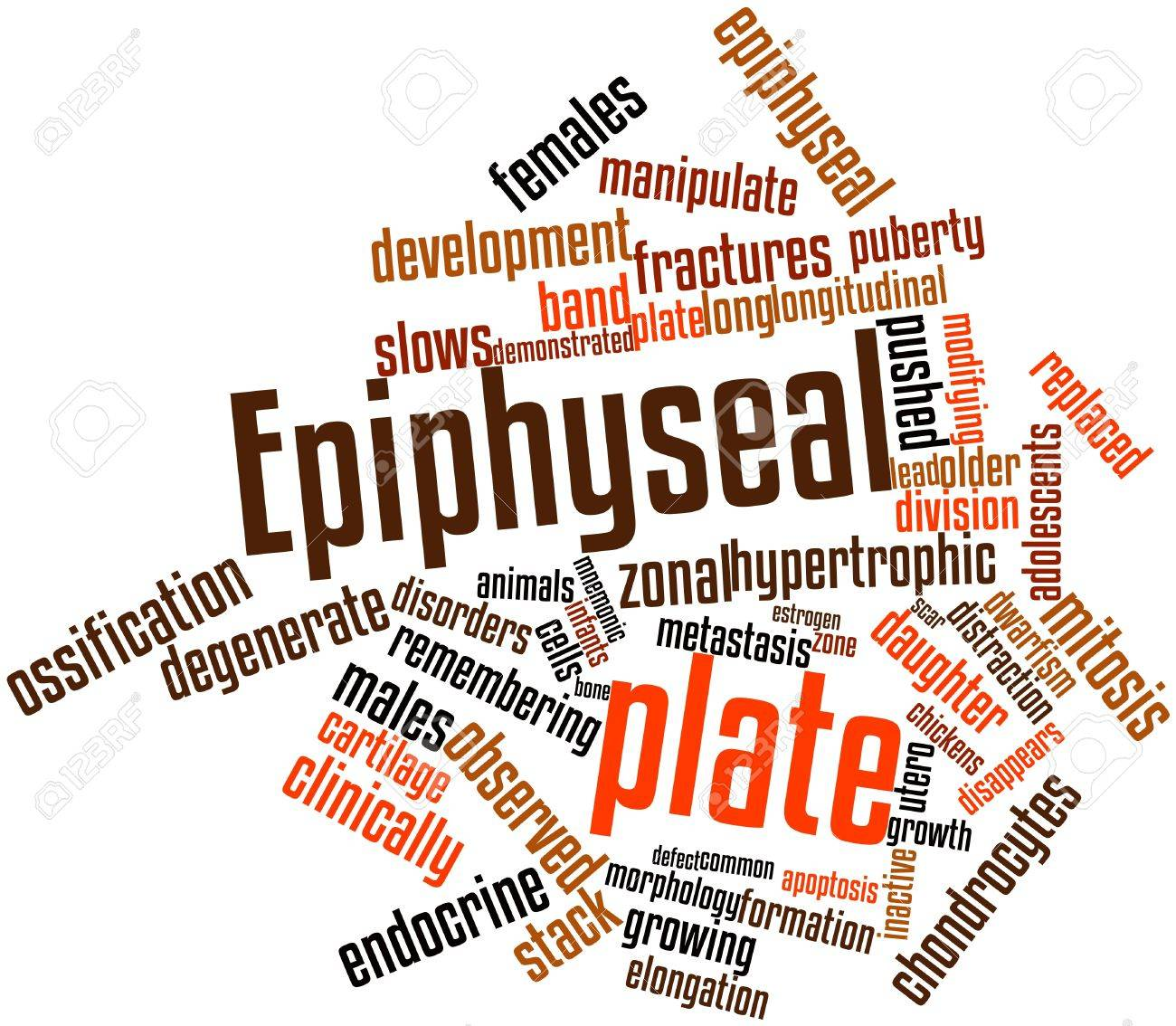 Abstract word cloud for Epiphyseal plate with related tags and terms Stock Photo - 16720107