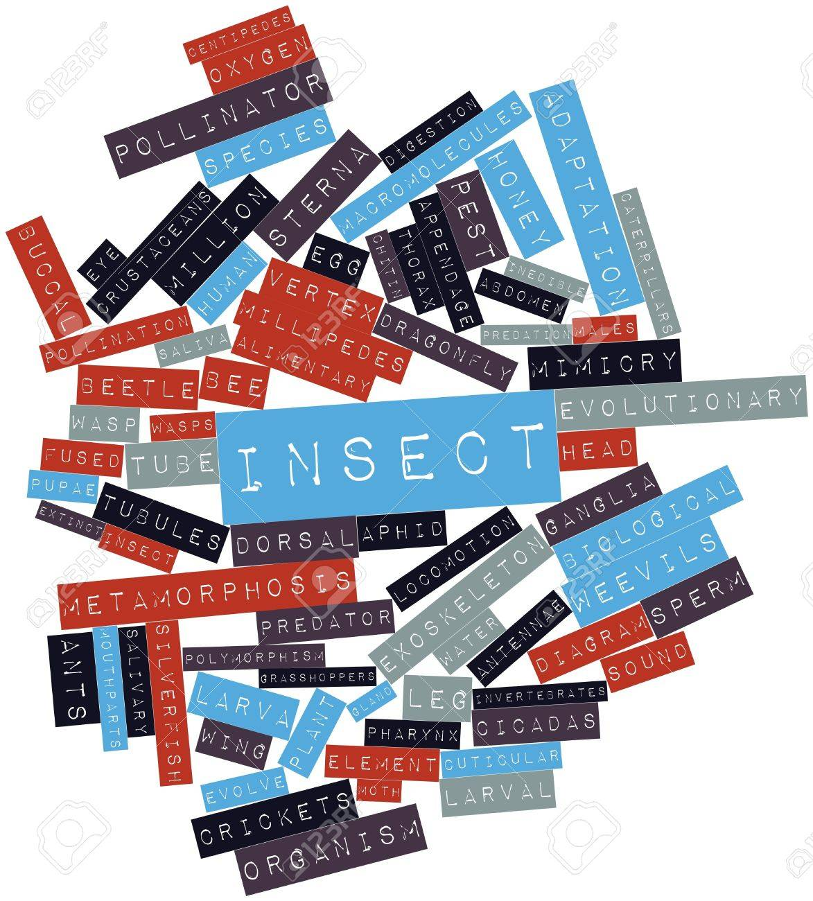 Abstract word cloud for Insect with related tags and terms Stock Photo - 16719847