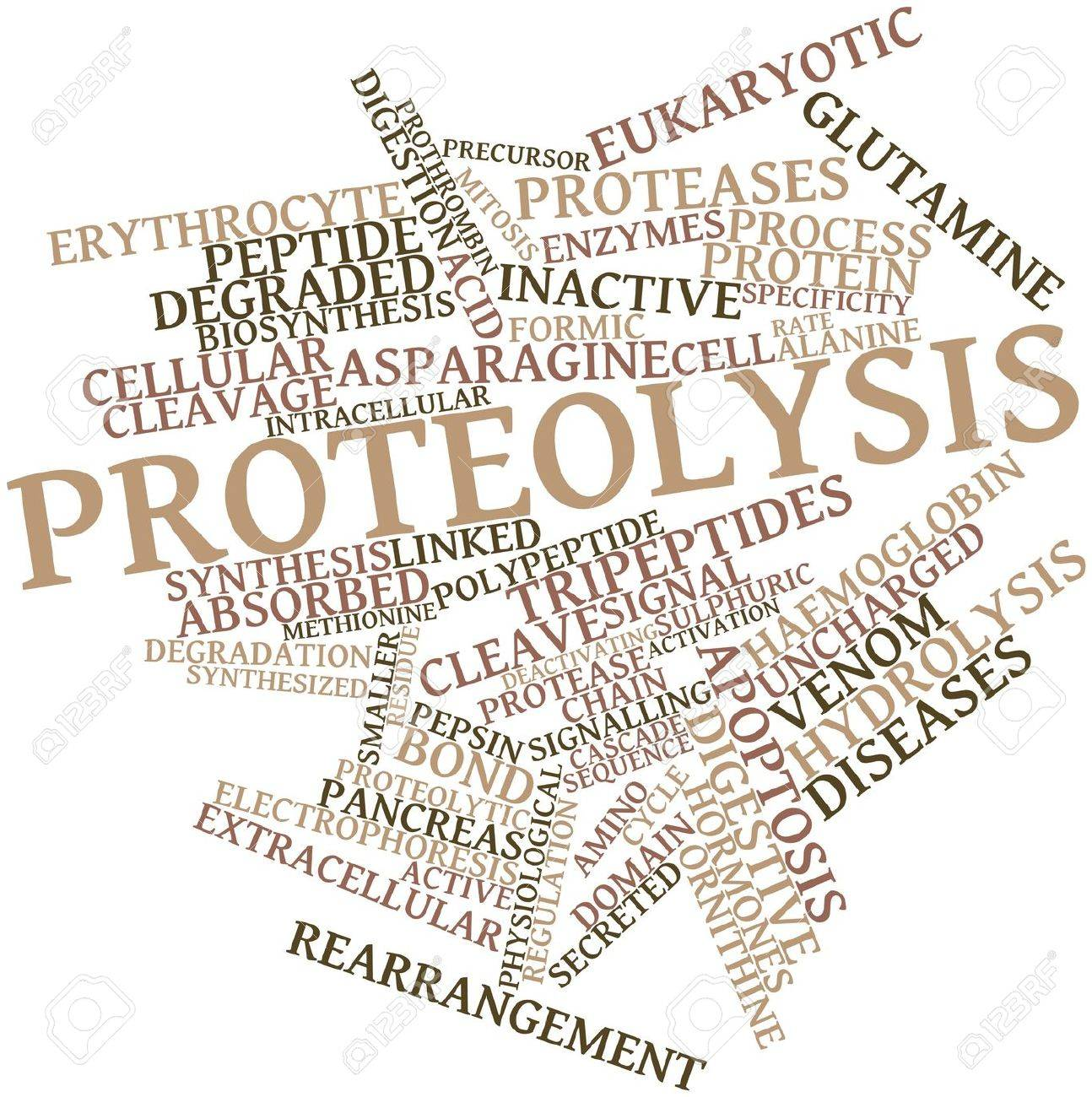 Abstract word cloud for Proteolysis with related tags and terms Stock Photo - 16720611