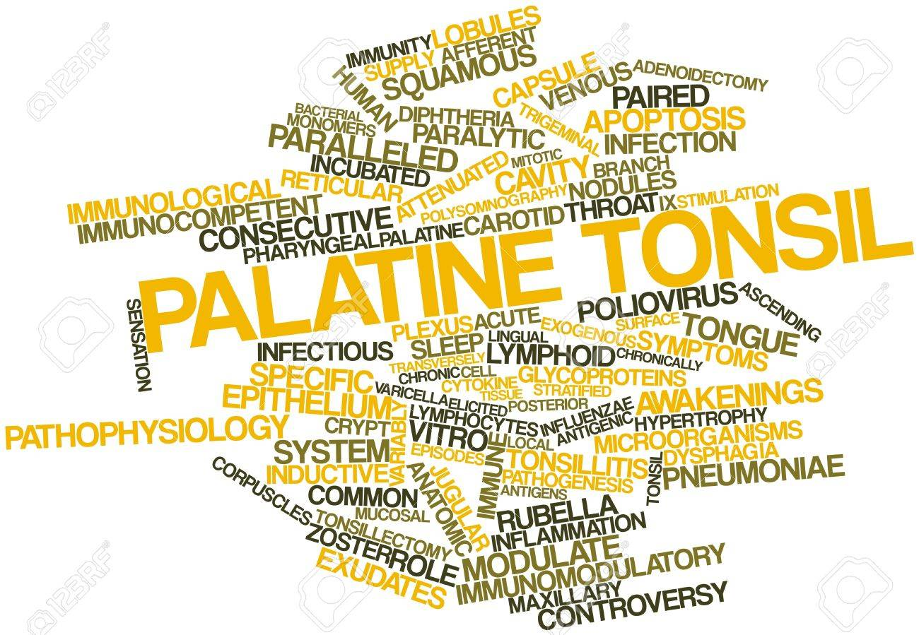 Abstract Word Cloud For Palatine Tonsil With Related Tags And ...