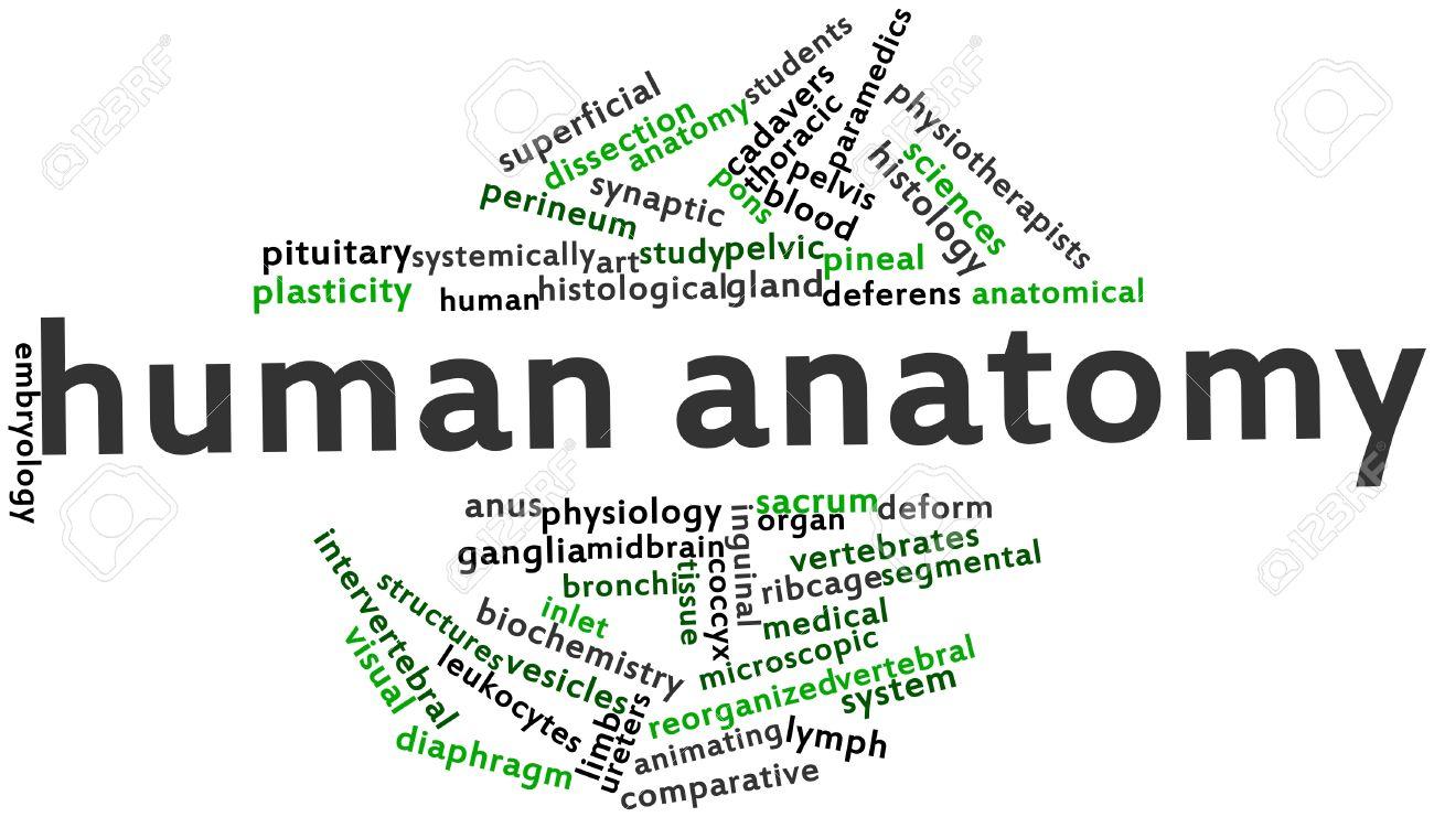 Abstraktes Wort-Wolke Für Menschliche Anatomie Mit Verwandten Tags ...