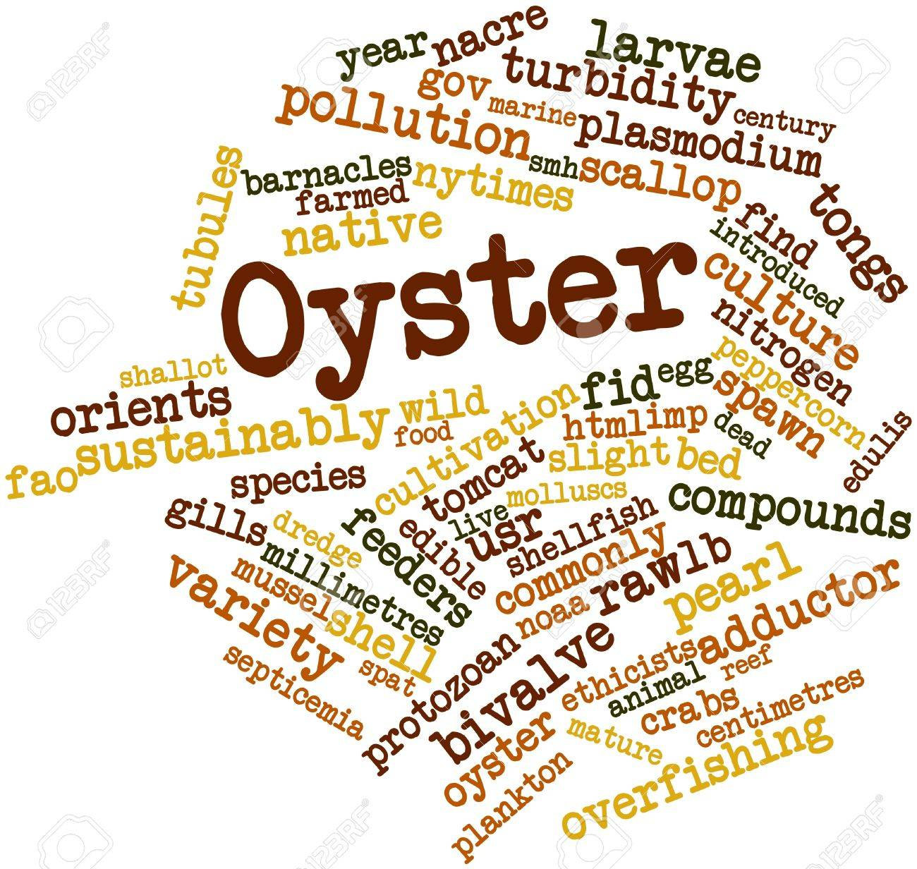 Abstract word cloud for Oyster with related tags and terms Stock Photo - 16983206
