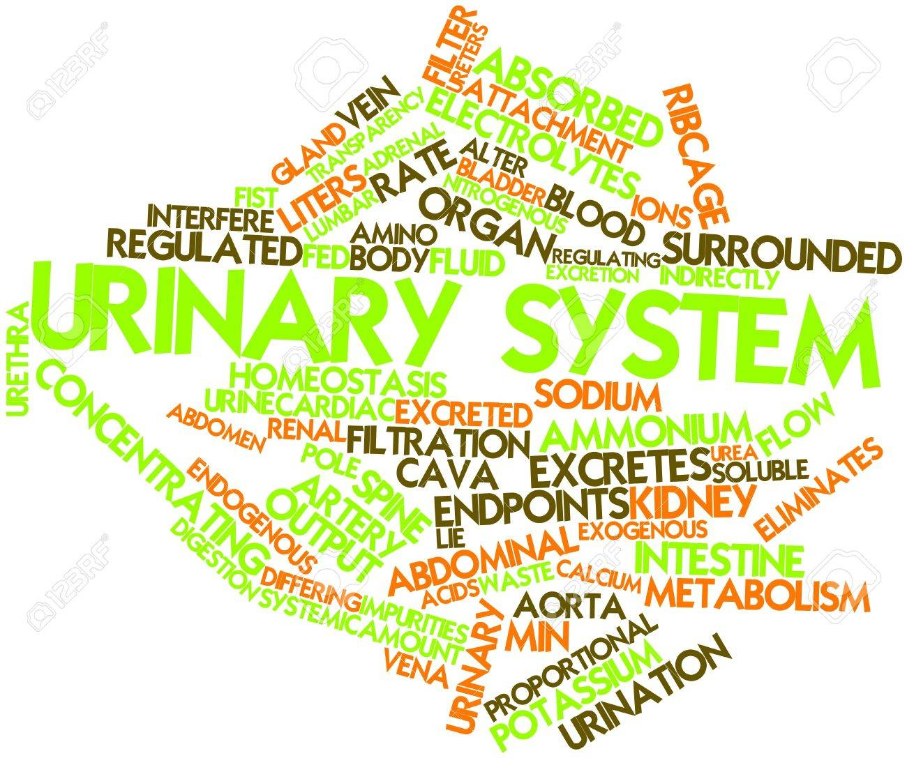 abstract word cloud for urinary system related tags and abstract word cloud for urinary system related tags and terms stock photo 16982980