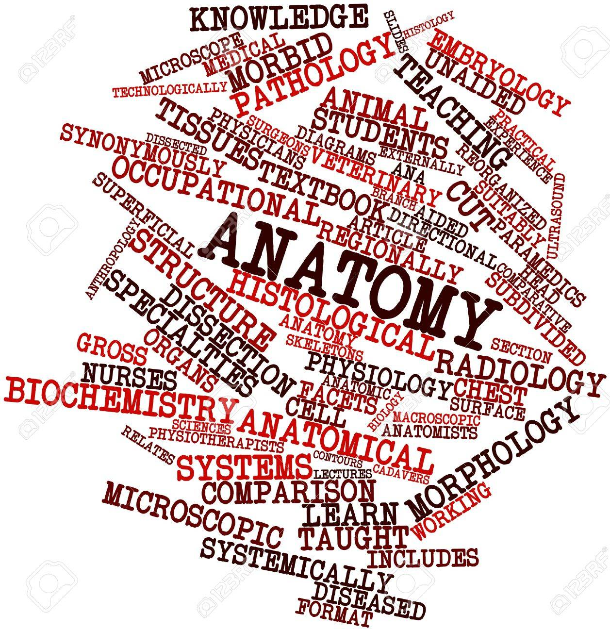Abstract Word Cloud For Anatomy With Related Tags And Terms Stock ...