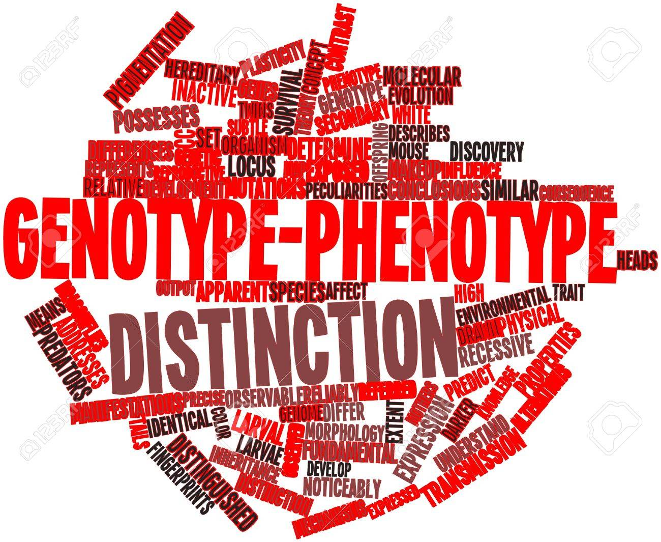 Abstract word cloud for Genotype-phenotype distinction with related tags and terms Stock Photo - 17024453