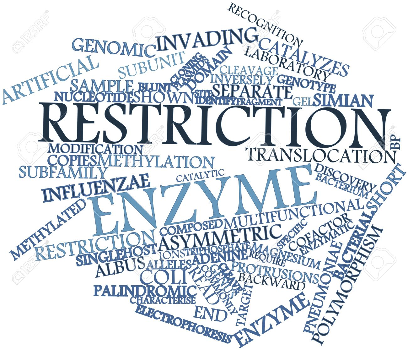 Abstract word cloud for Restriction enzyme with related tags and terms Stock Photo - 17024496