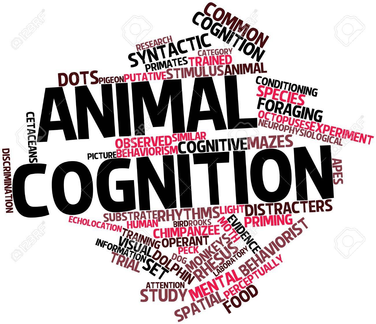 Nube palabra abstracta para la cognición animal con las etiquetas y términos relacionados Foto de archivo - 17141906