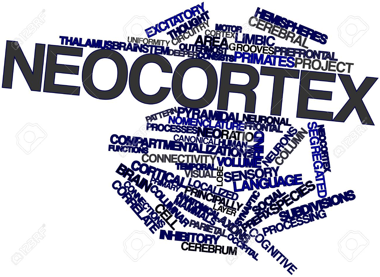 Abstract word cloud for Neocortex with related tags and terms Stock Photo - 17319548