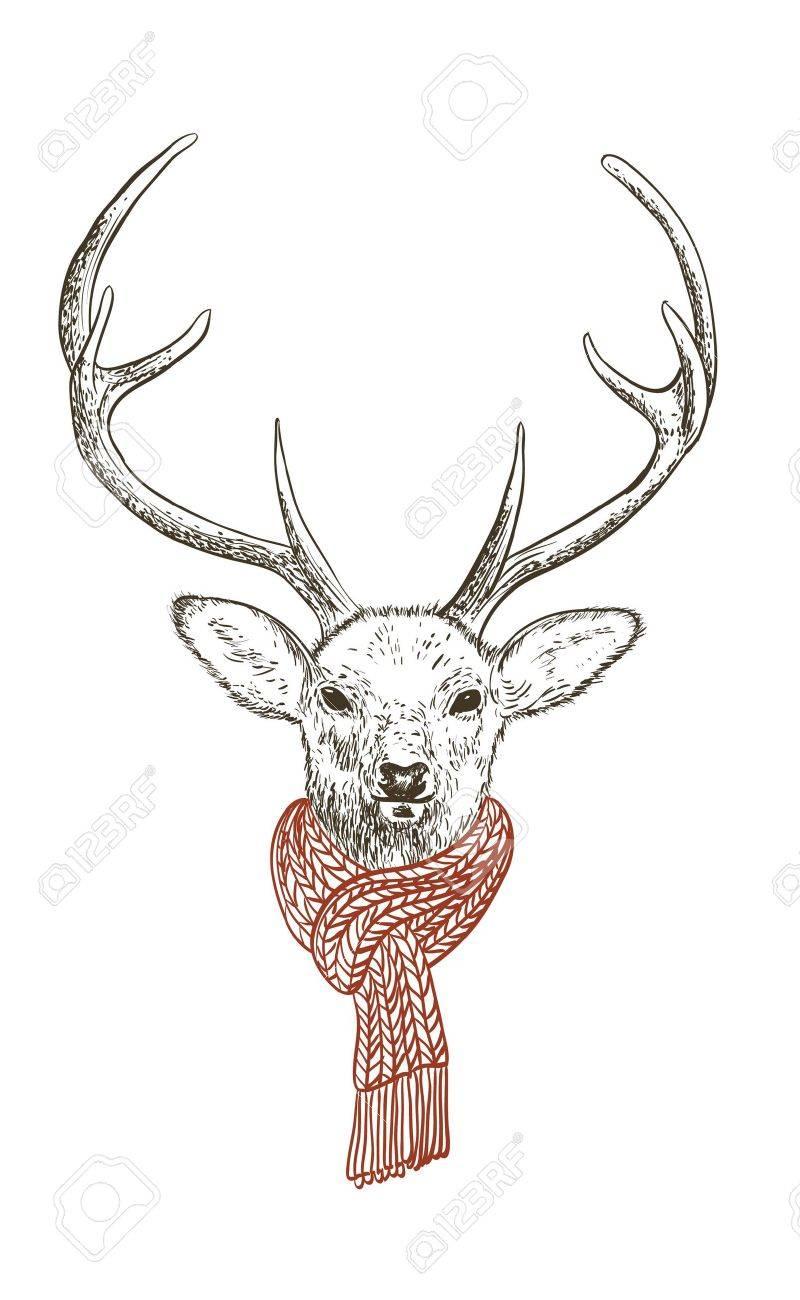Pen and ink illustration of deer in scarf - 12041608