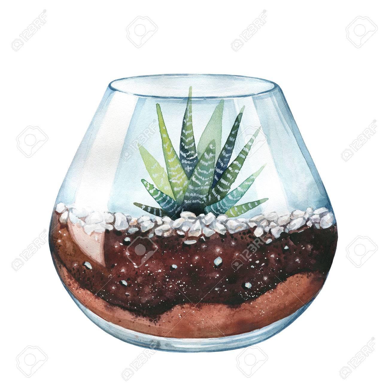 Illustration Aquarelle Cactus De Zebre Haworthia Raye Terrarium