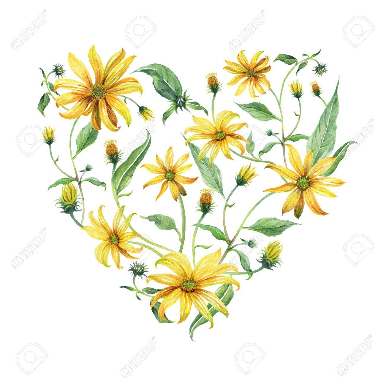 Watercolor Wreath Heart Shaped Yellow Daisies With Green Leaves Stock Photo Picture And Royalty Free Image Image 71890471