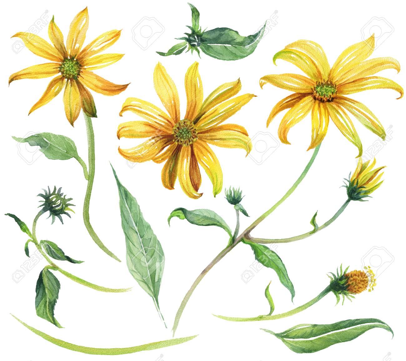 花柄要素のセットです。水彩花、小枝および緑の葉。黄色のデイジー。白い