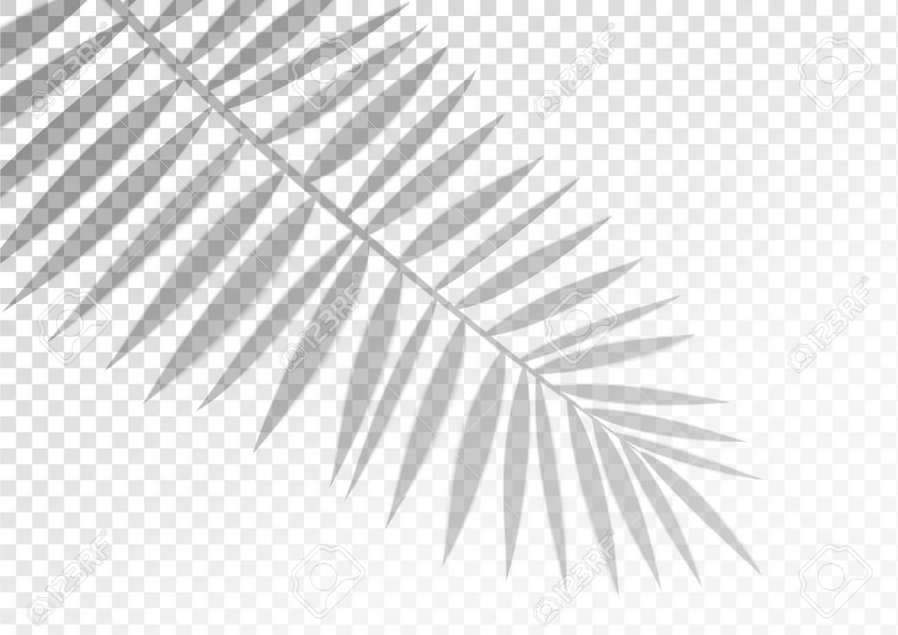 The Transparent Shadow Overlay Effect Tropic Leaf Mockup With Royalty Free Cliparts Vectors And Stock Illustration Image 132042420 Find images of tropical leaves. the transparent shadow overlay effect tropic leaf mockup with