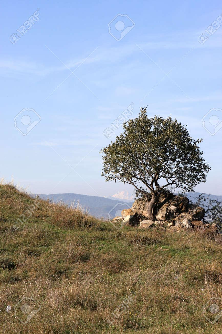 """Tree on dzhvari hill  The name Dzhvari means """"cross"""""""
