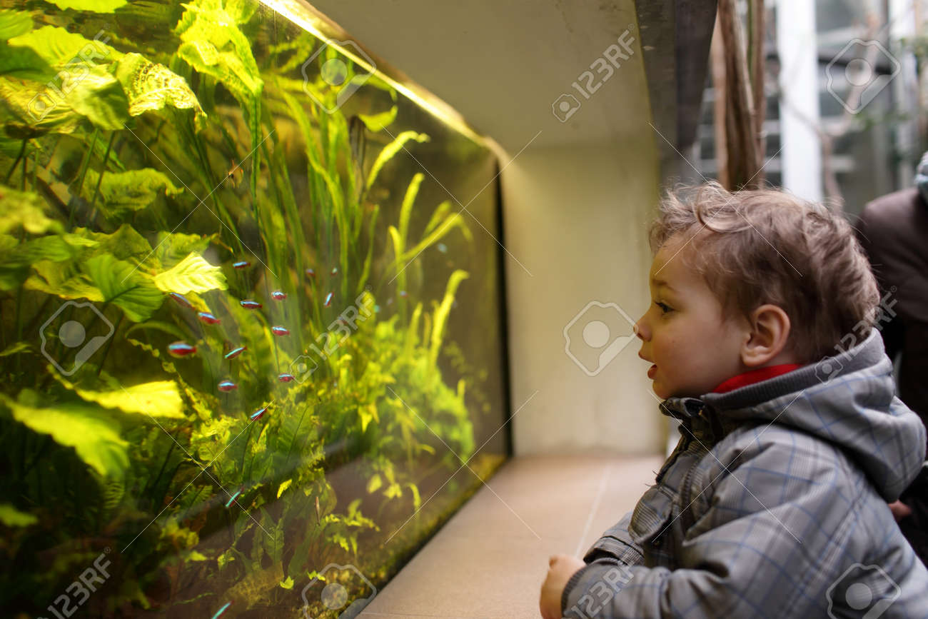 The child watching fishes in an aquarium Stock Photo - 27447553