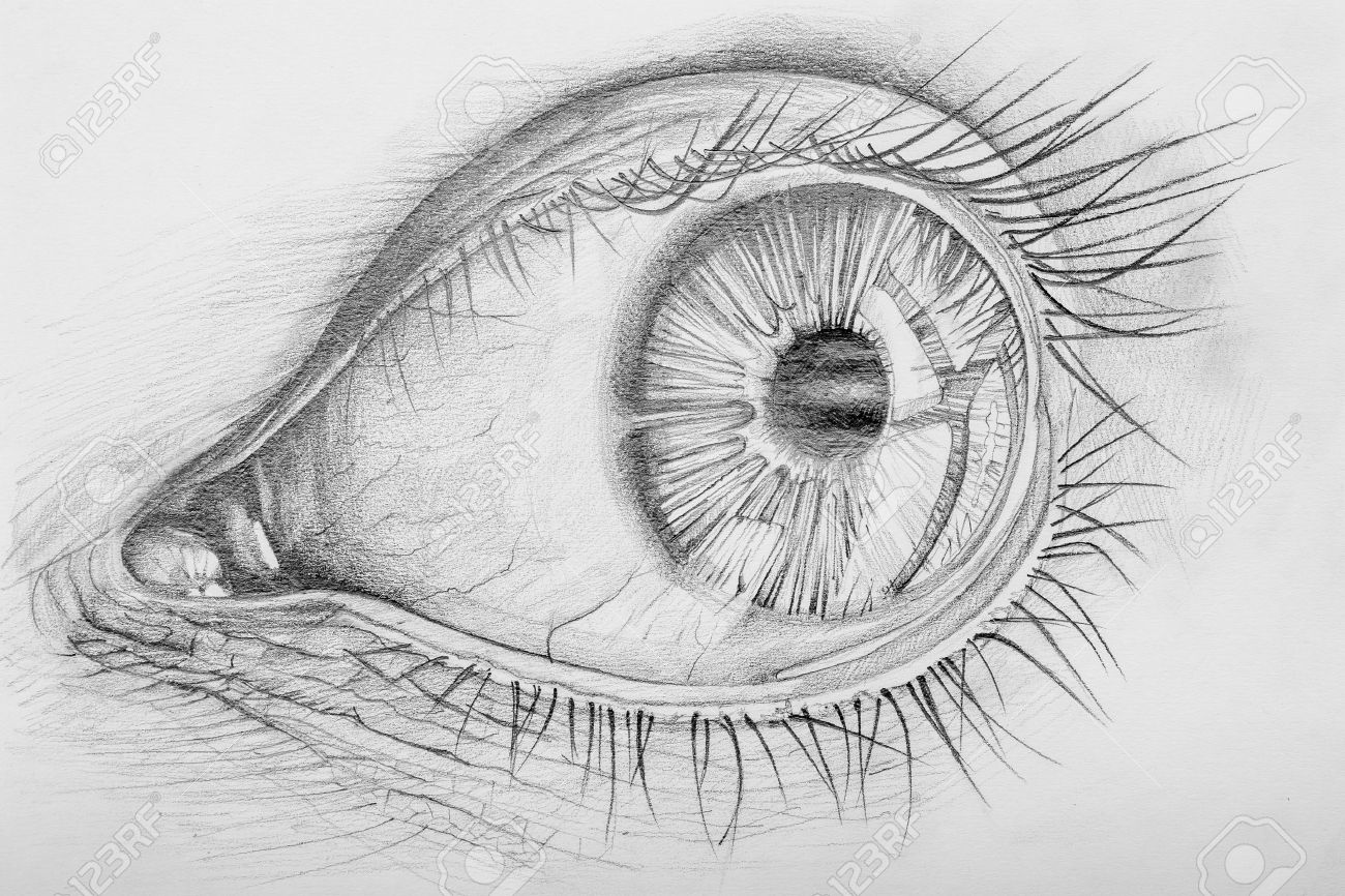 Pencil drawn anatomy of a human eye stock photo 18786916