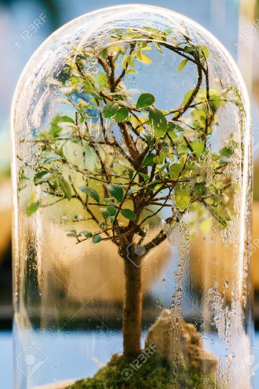 Decorative Bonsai Tree Inside Glass Terrarium Stock Photo Picture And Royalty Free Image Image 102250284
