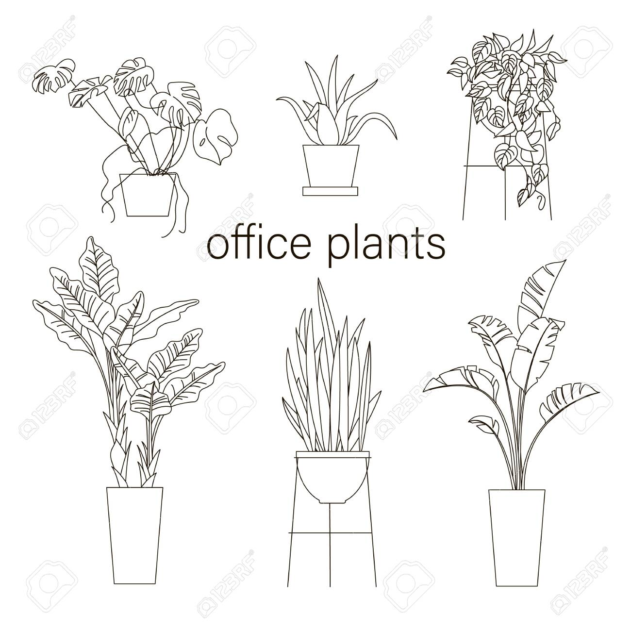 Set Of House Plant Line Drawing Vector Illustration Plants In Royalty Free Cliparts Vectors And Stock Illustration Image 138268151