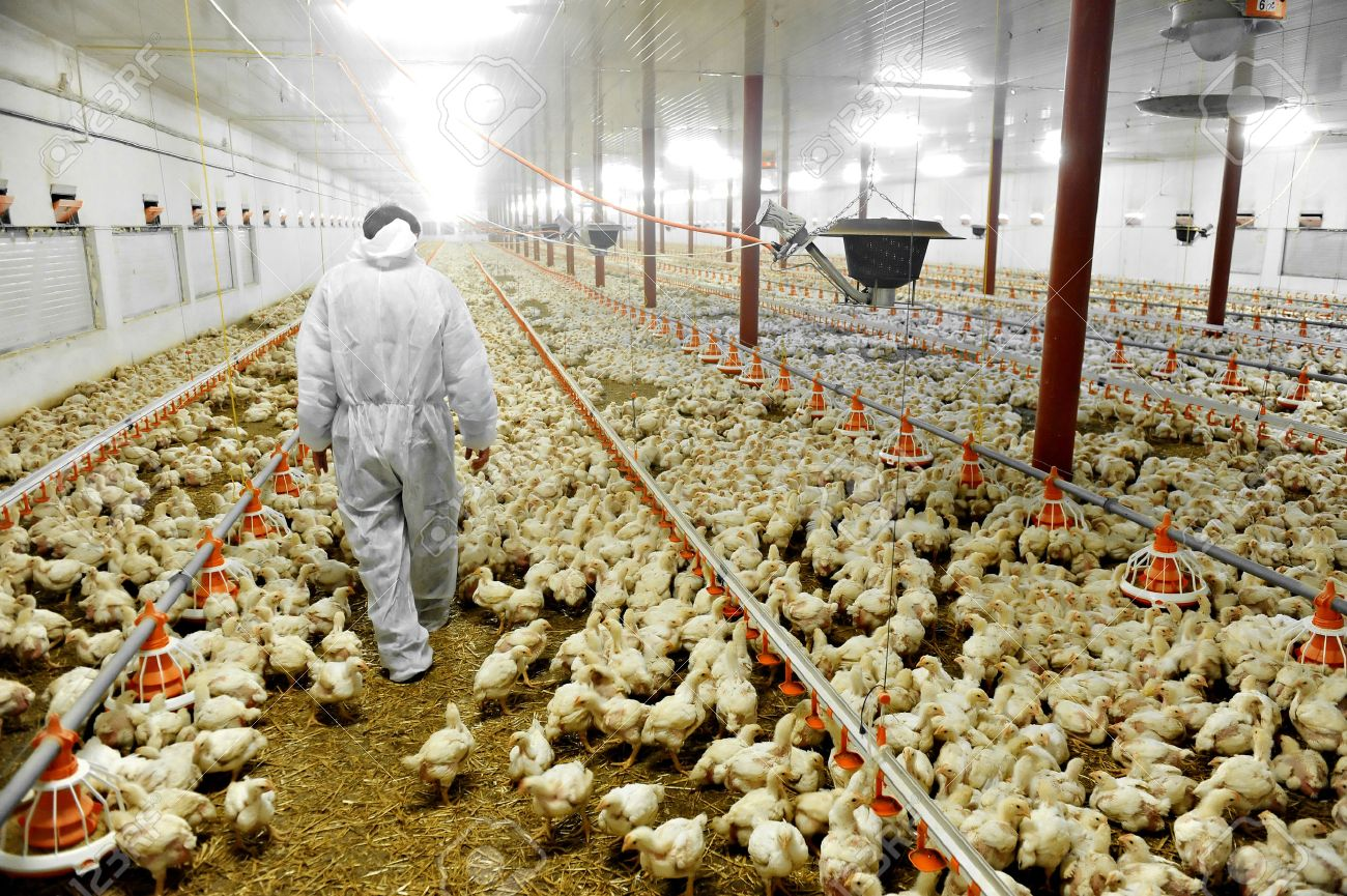 Chicken House Farm Poultry Farm Stock Photosroyalty Free Poultry Farm Images And
