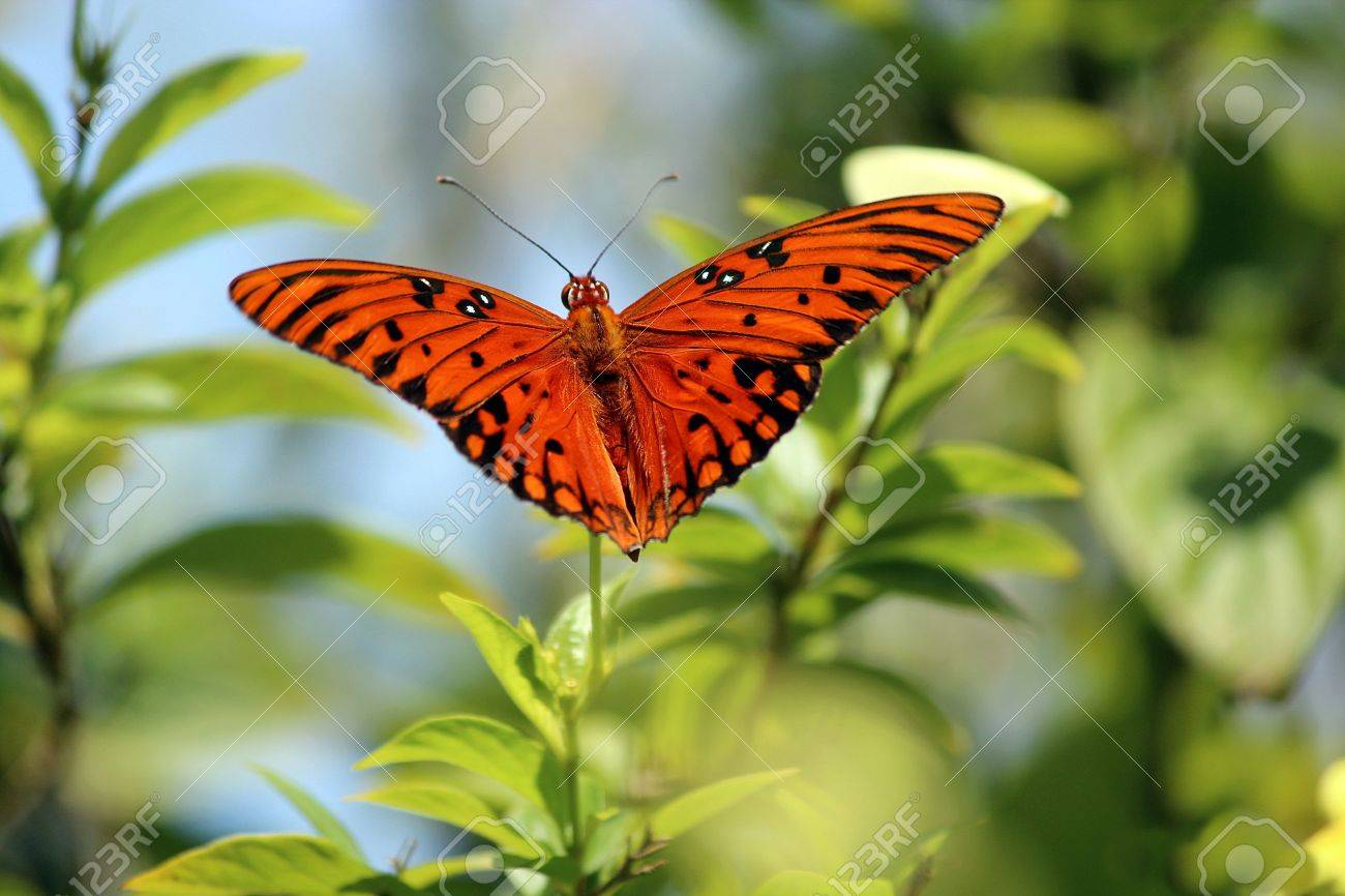 beautiful butterfly landing on flower stock photo picture and