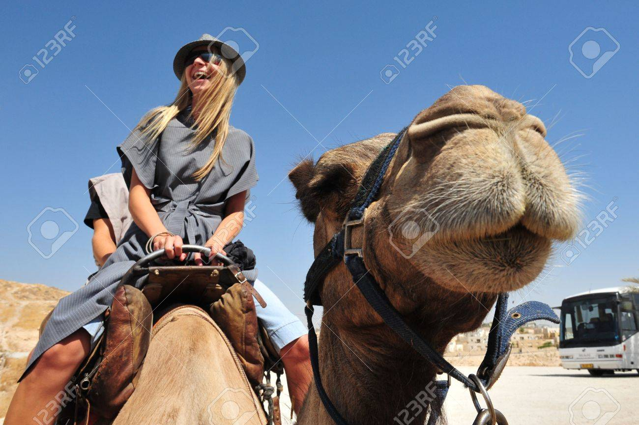 JERICHO - SEP 17:Tourist during camel ride on September 17 2008 in the Judean Desert, Israel.It's a rain shadow desert located between Jerusalem to Jericho 85 miles long and 25 miles wide. - 46438013