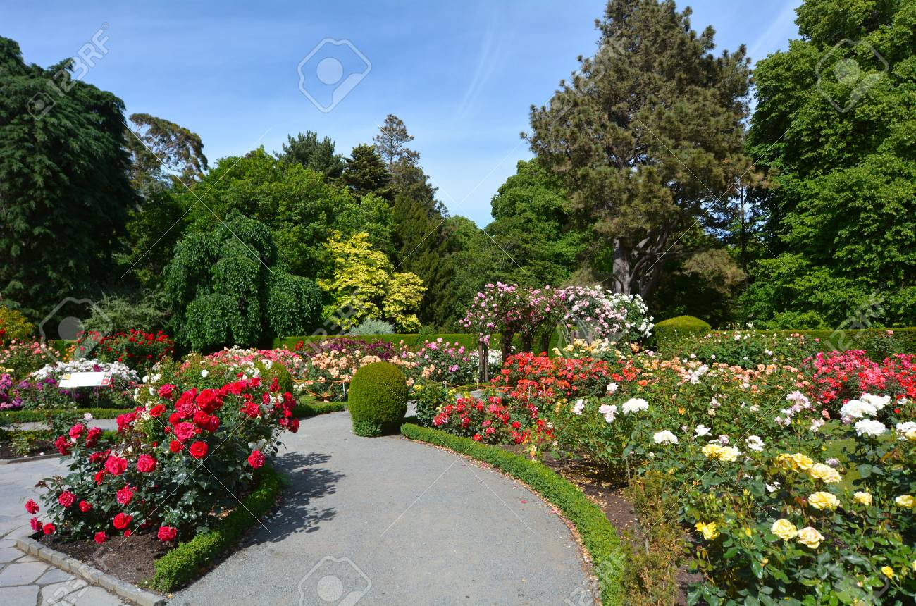 CHRISTCHURCH, NZL - DEC 04 2015:The Heritage Rose Garden in Christchurch Botanic Gardens, New Zealand. It has a selection of rambling heritage roses that delight in the summer months. - 49377408