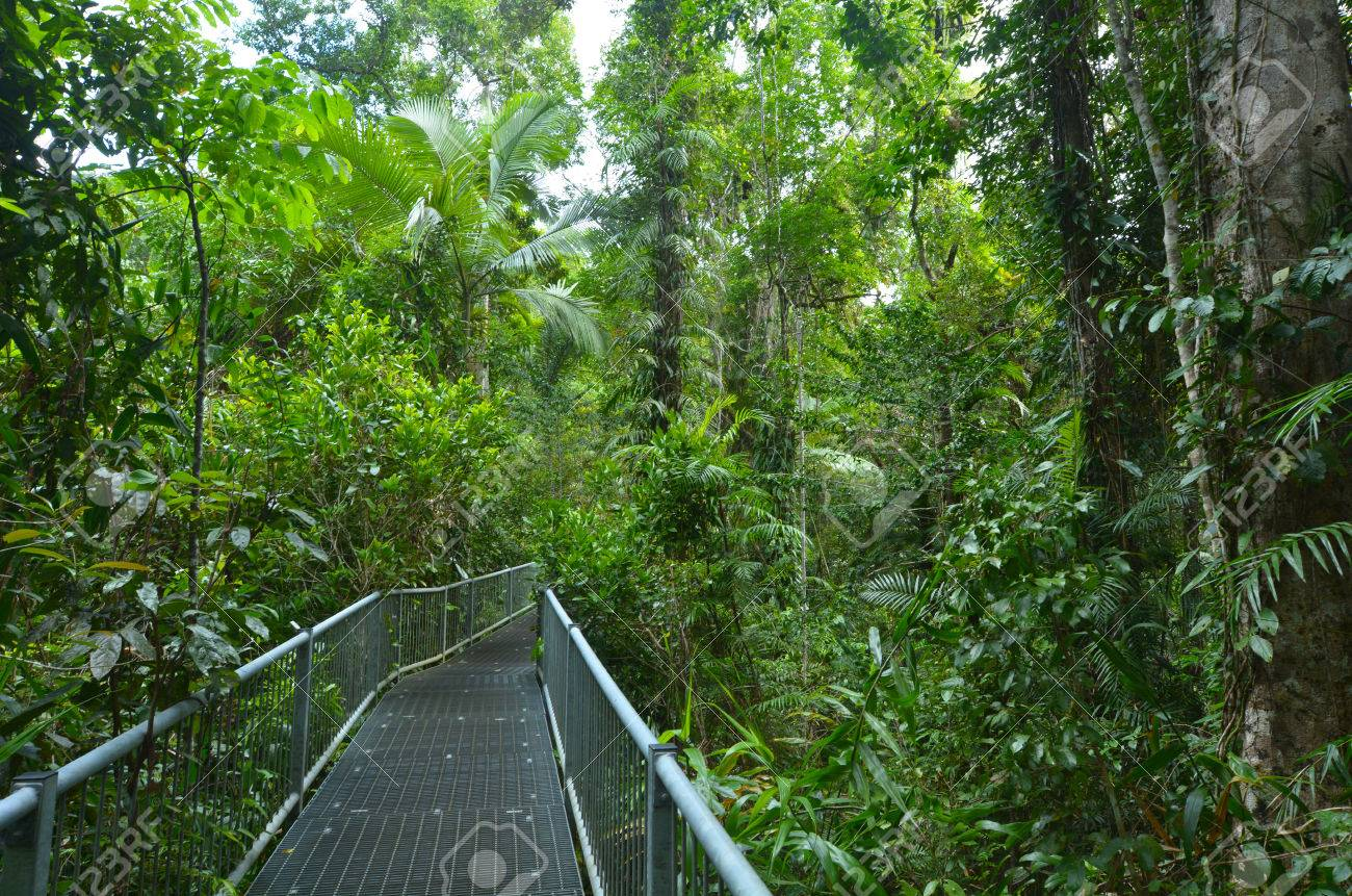 Path in Daintree National Park in the tropical north of Queensland Australia founded in 1981 & Path In Daintree National Park In The Tropical North Of Queensland ...