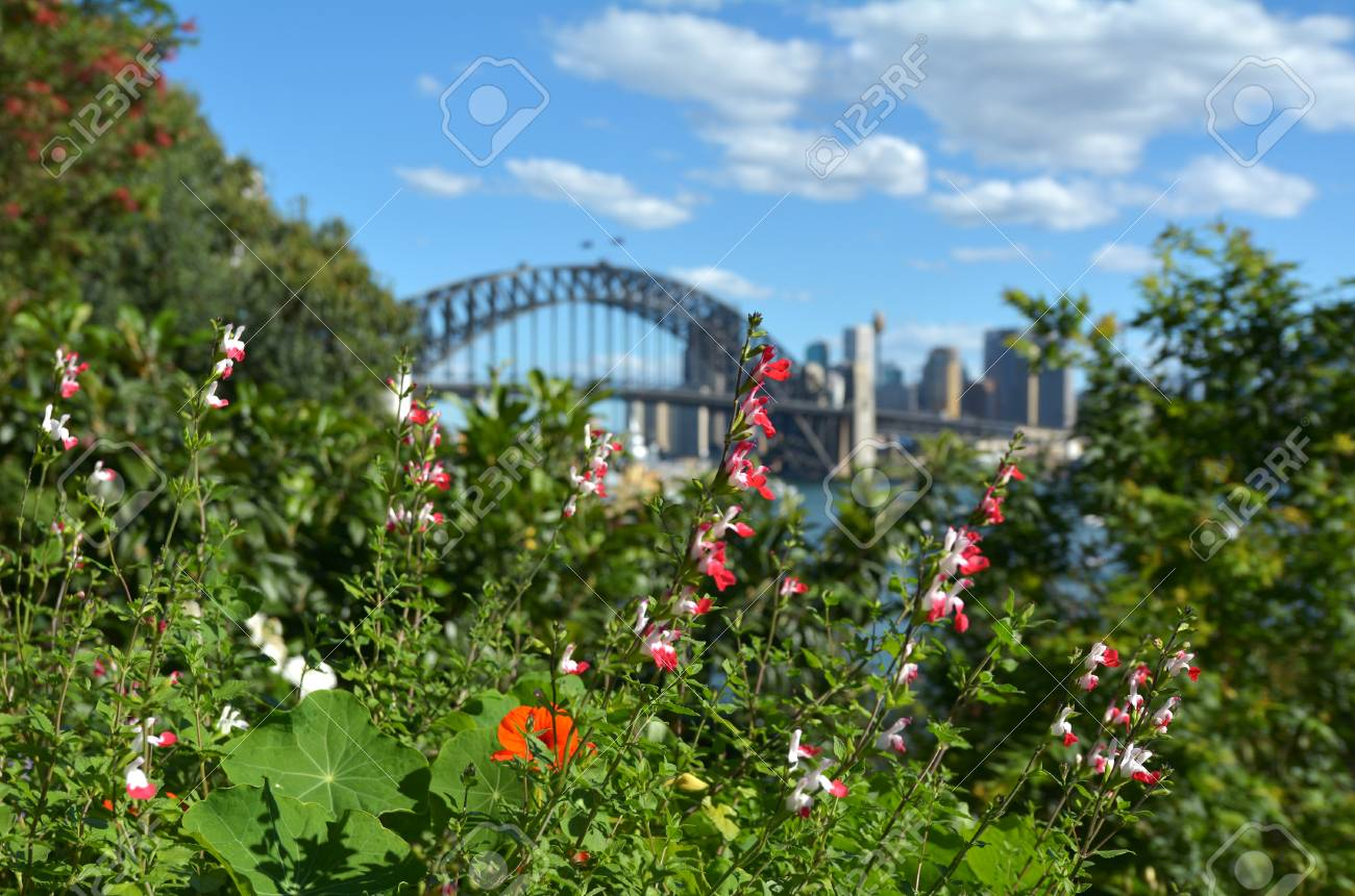 Plants And Flowers Blooms In Spring Time Against Sydney Skyline