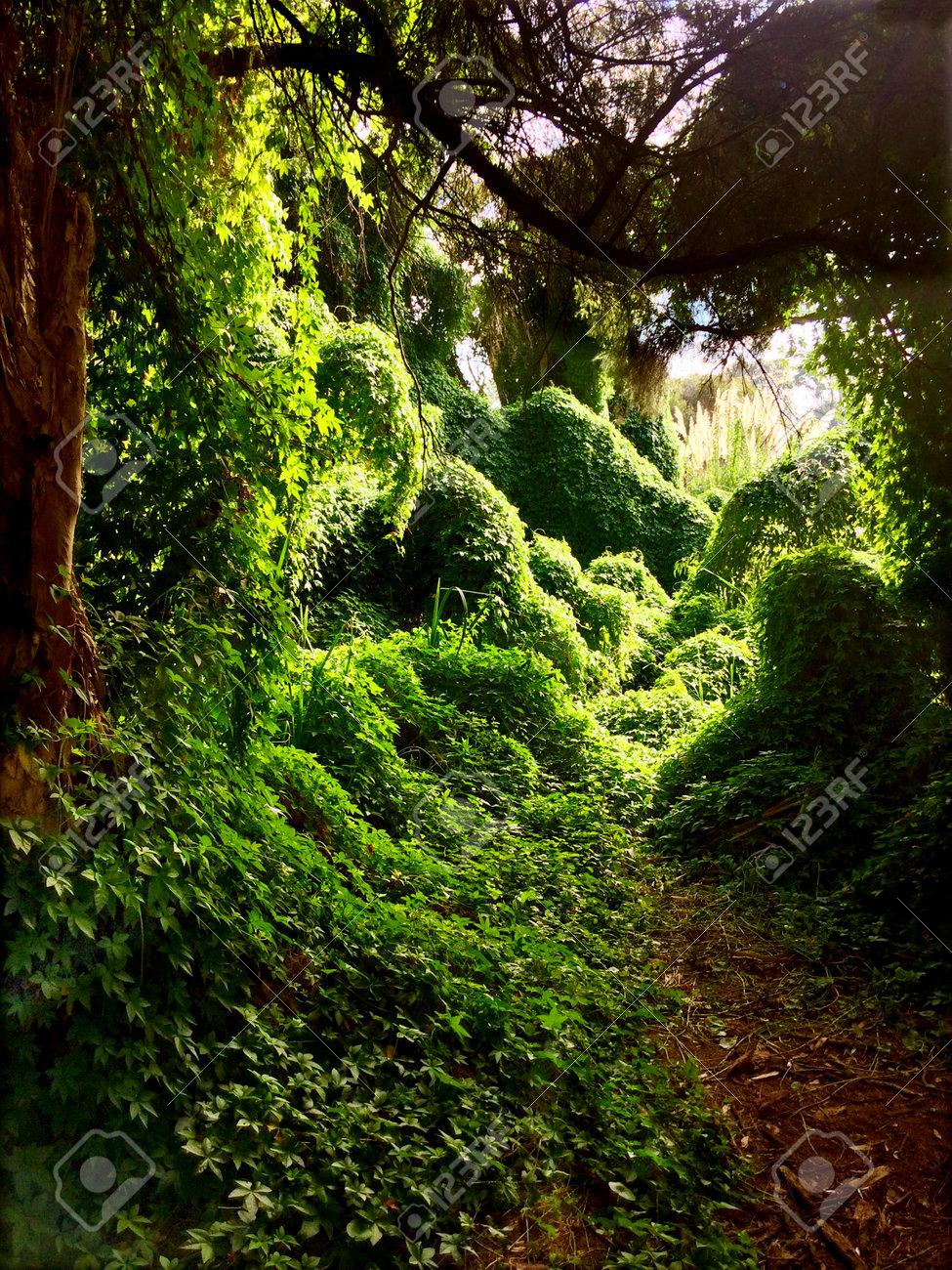 Tropical rain forest secret garden landscape. - 168379612