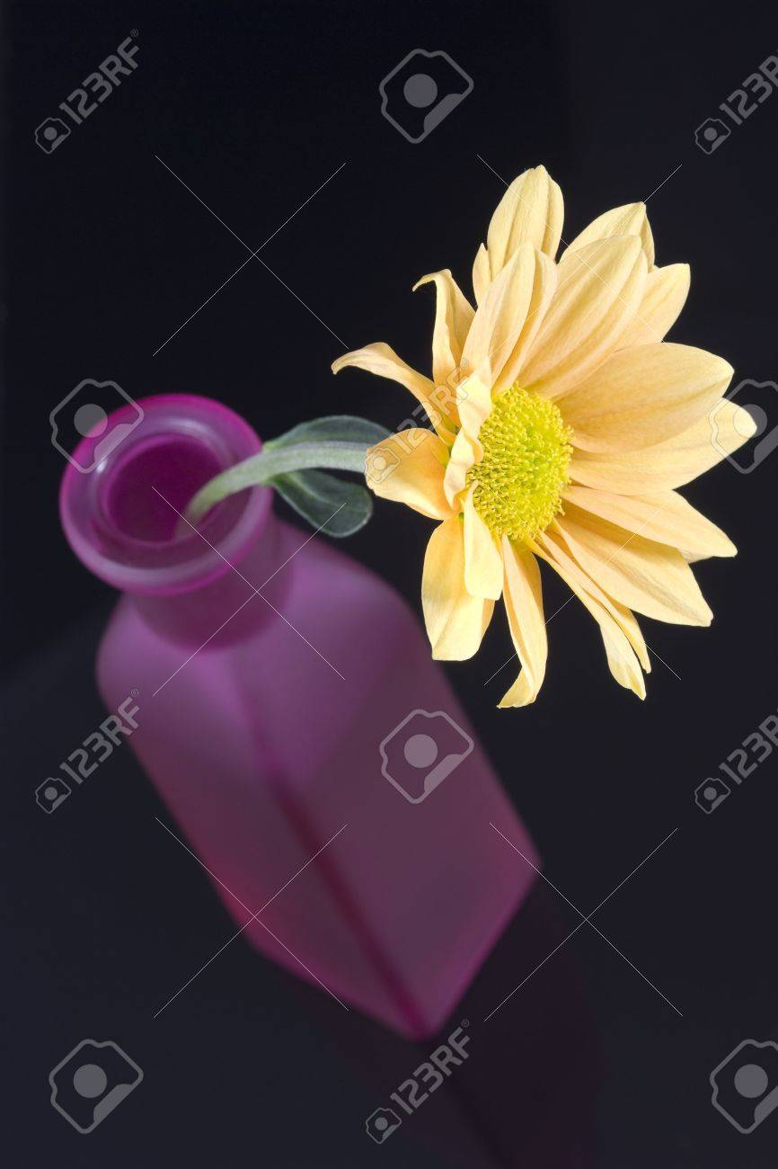 Yellow Daisy Flower Arranged In Purple Bottle Stock Photo Picture