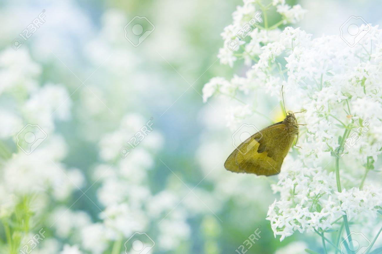 Papillon assis sur un fond d\u0027écran fleur pastel