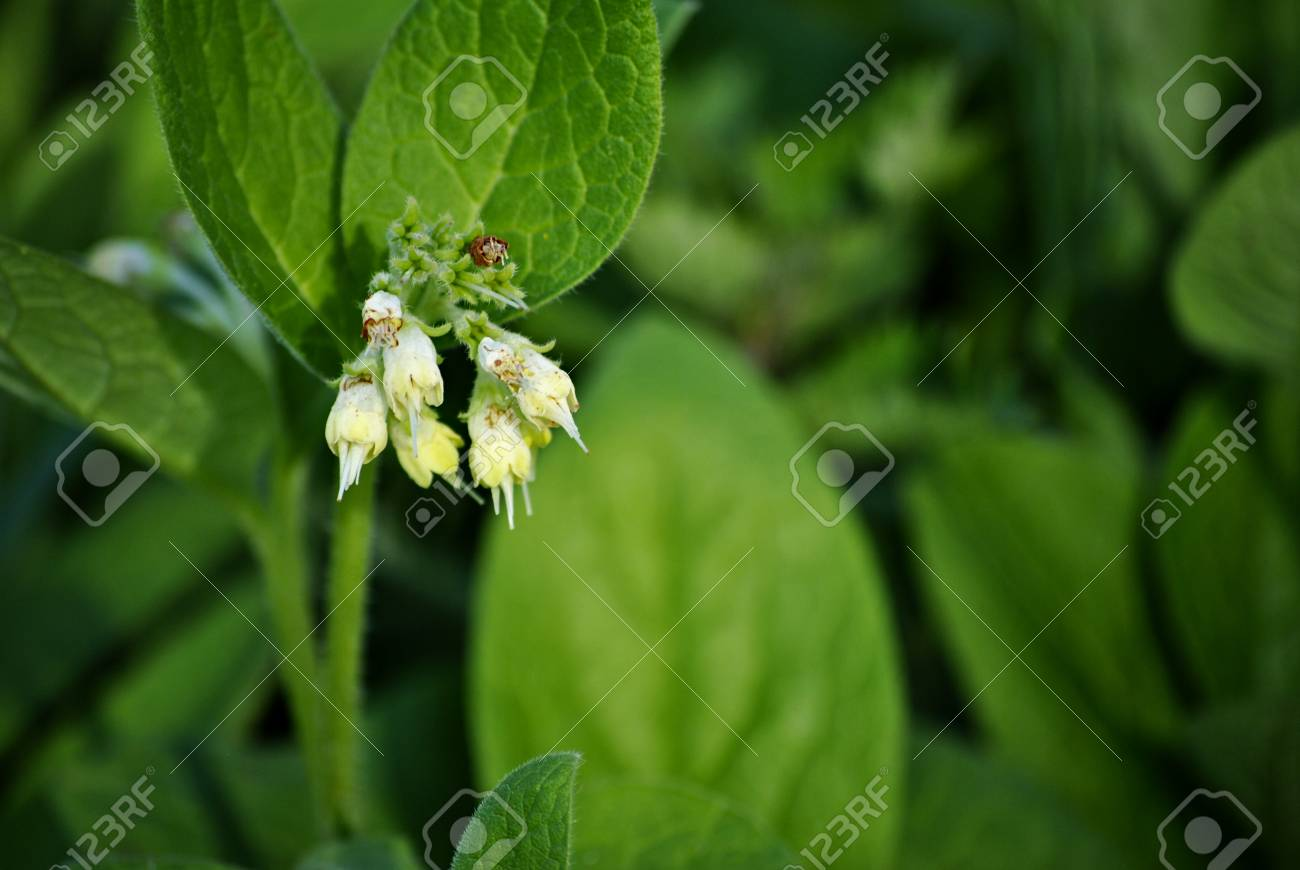 Small Little Flowers In Groups Like White Bells Stock Photo, Picture ...