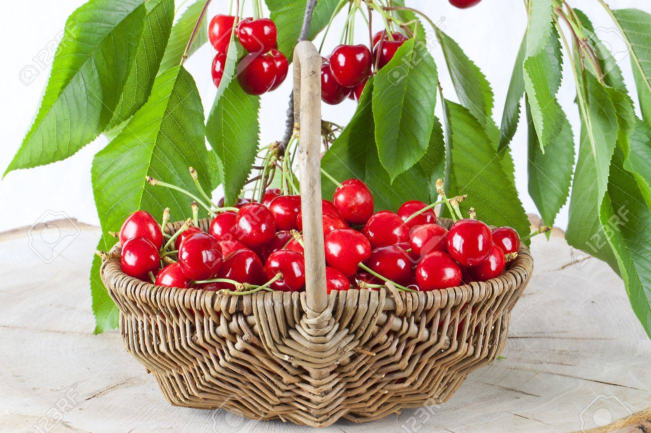 Red cherries in wicker basket. Stock Photo - 10024662