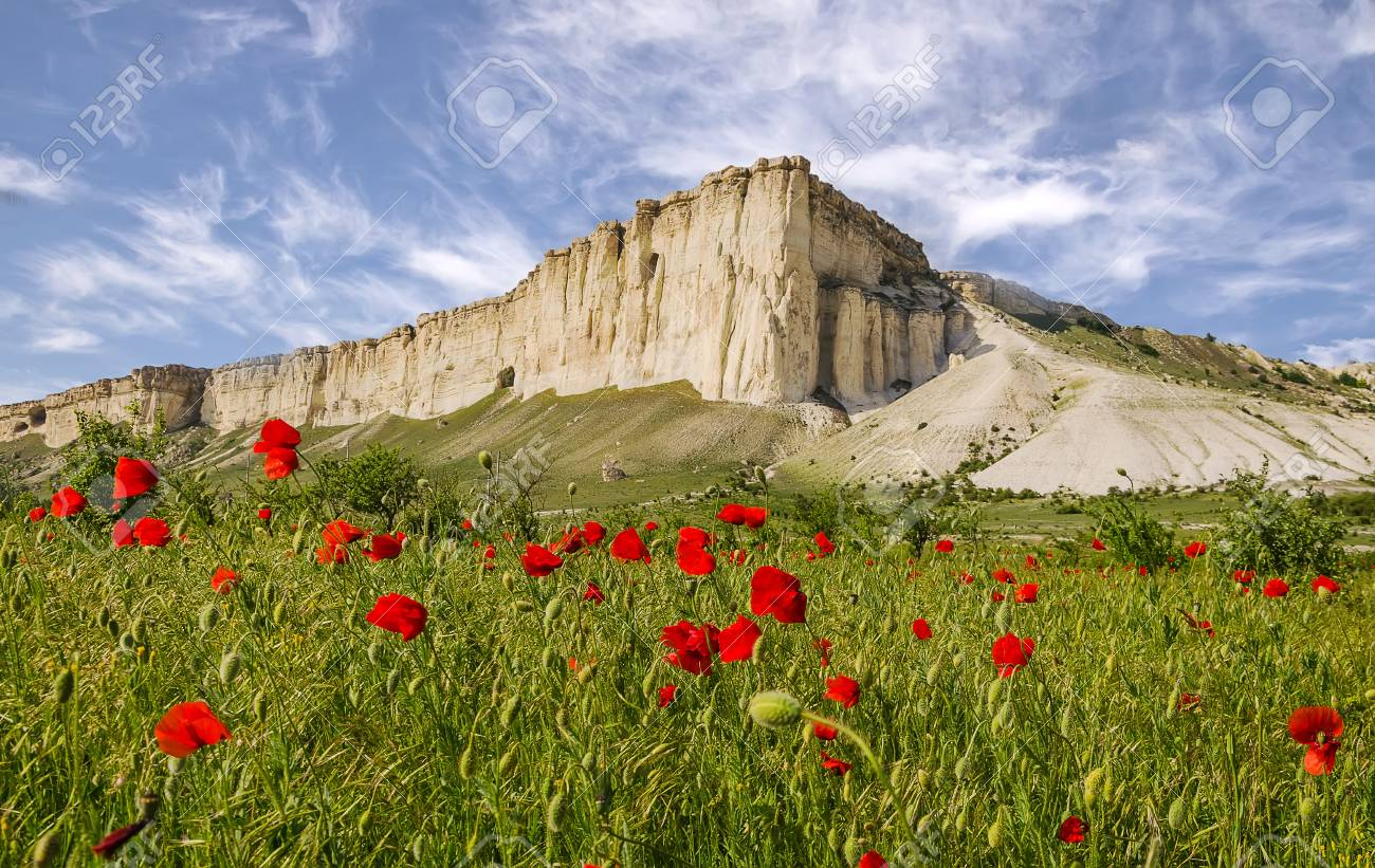 White Rock And Field Of Flowers In Blossom Stock Photo Picture And