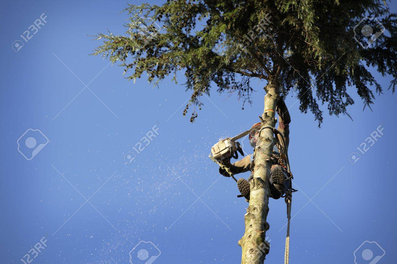 An arborist cutting a tree with a chainsaw Stock Photo - 11721079